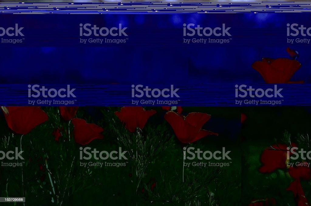 yellow poppy in garden royalty-free stock photo