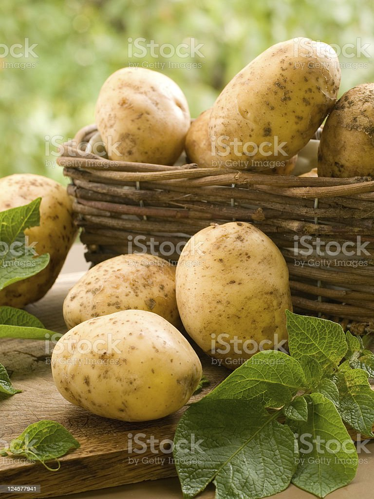 Yellow potatoes in a basket on wood table with green leaves stock photo