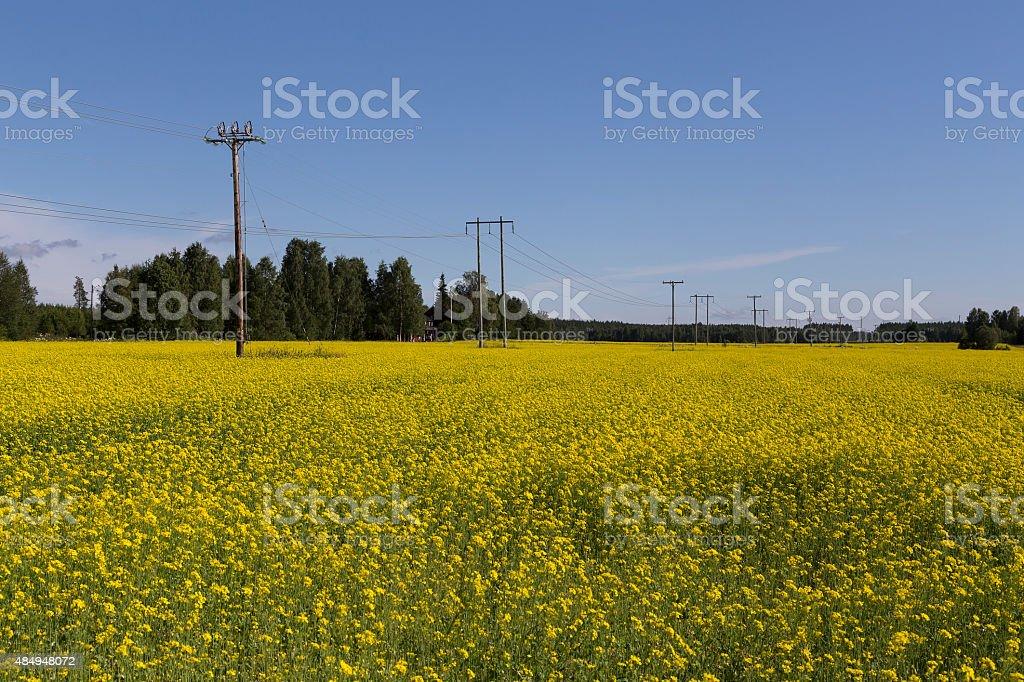 Yellow power royalty-free stock photo
