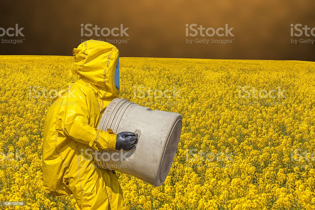 Yellow rape field and men in protective hazmat suit stock photo