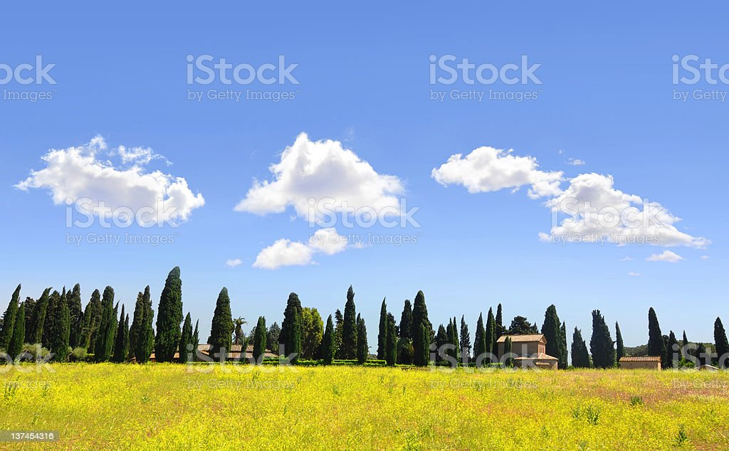 Yellow rapeseed and cypress in Tuscany, Italy royalty-free stock photo