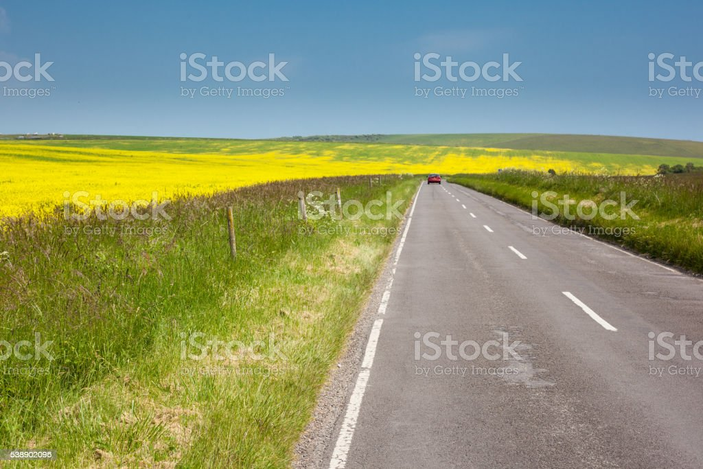 Yellow rapeseed fields, East Sussex, UK stock photo