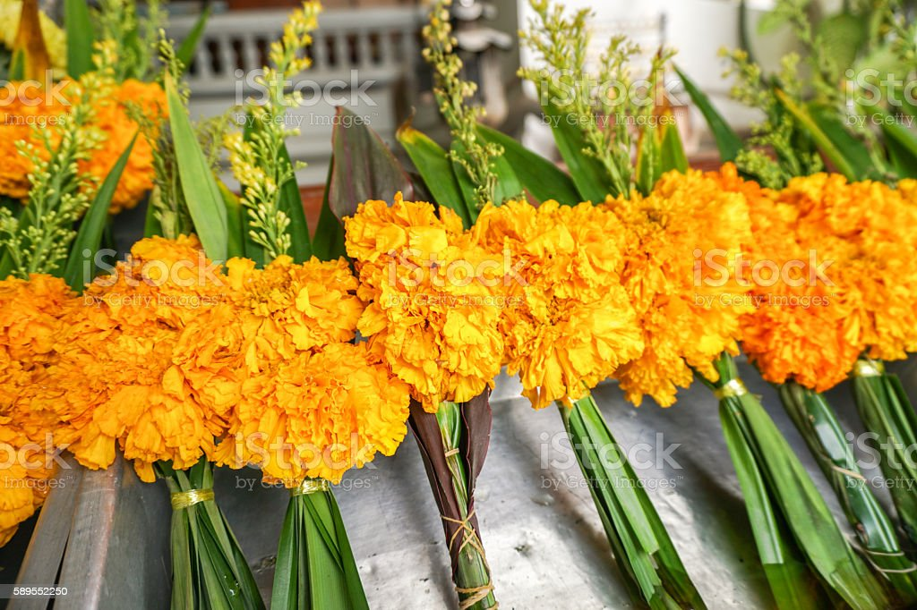 Yellow religious buddhist marigold flowers stock photo