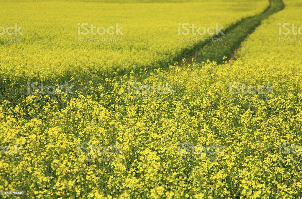 Yellow Road royalty-free stock photo