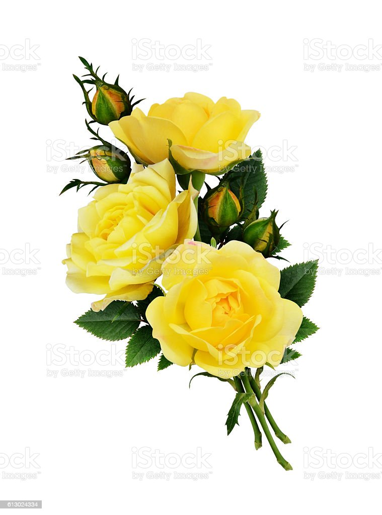 Yellow rose flowers bouquet stock photo