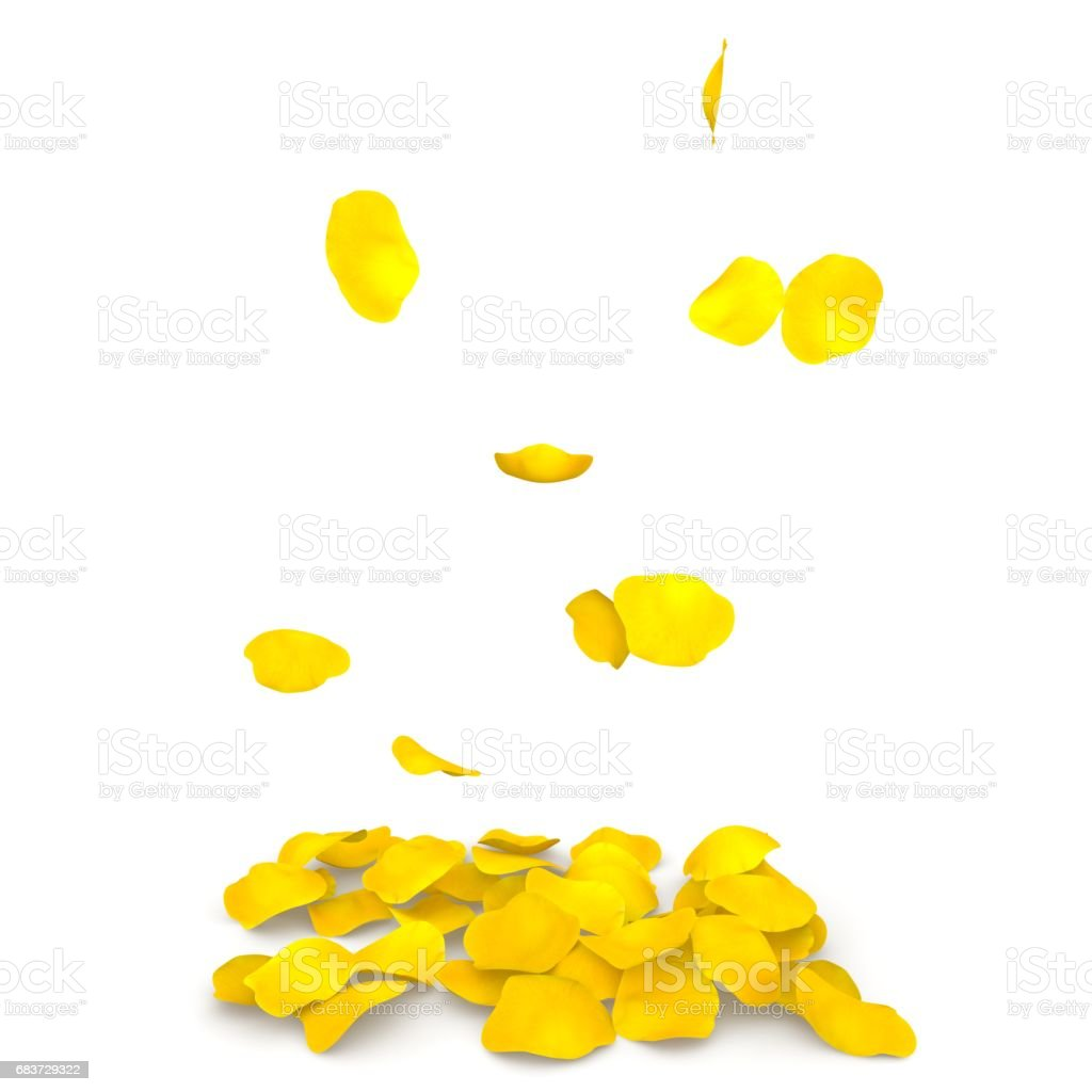 Yellow rose petals flying on the floor stock photo