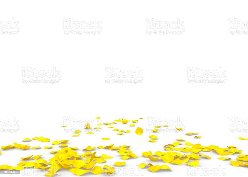 Yellow rose petals scattered on the floor stock photo