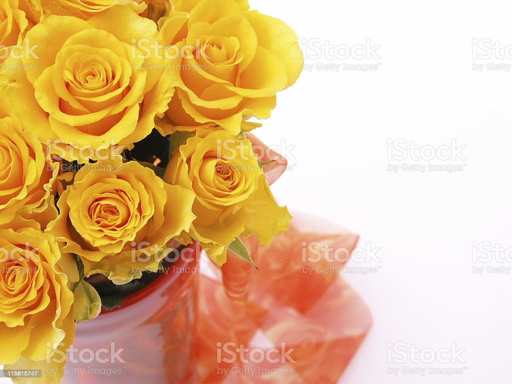Yellow roses royalty-free stock photo