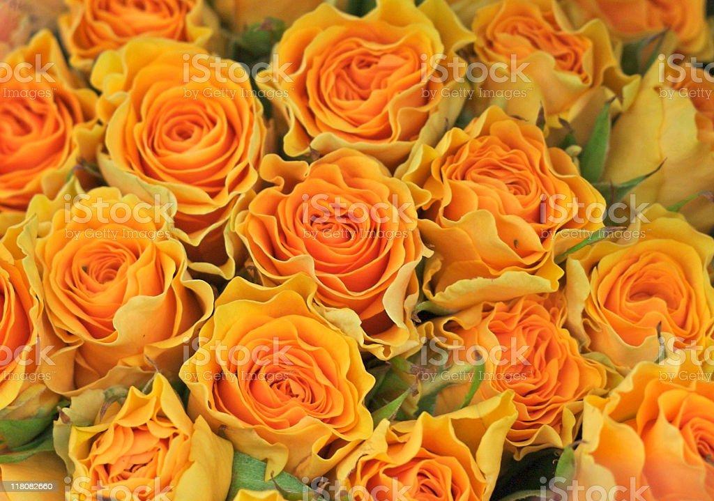 Yellow Roses royalty-free stock photo