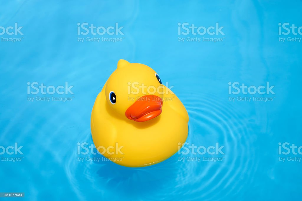 Yellow rubber duck in the pool stock photo