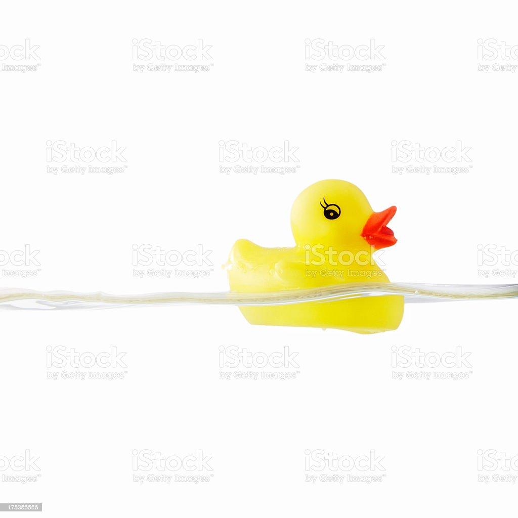 Yellow rubber ducky stock photo