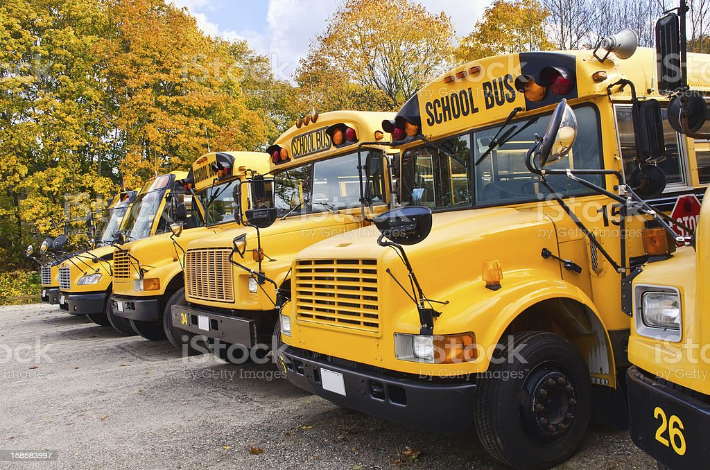 Yellow school buses royalty-free stock photo