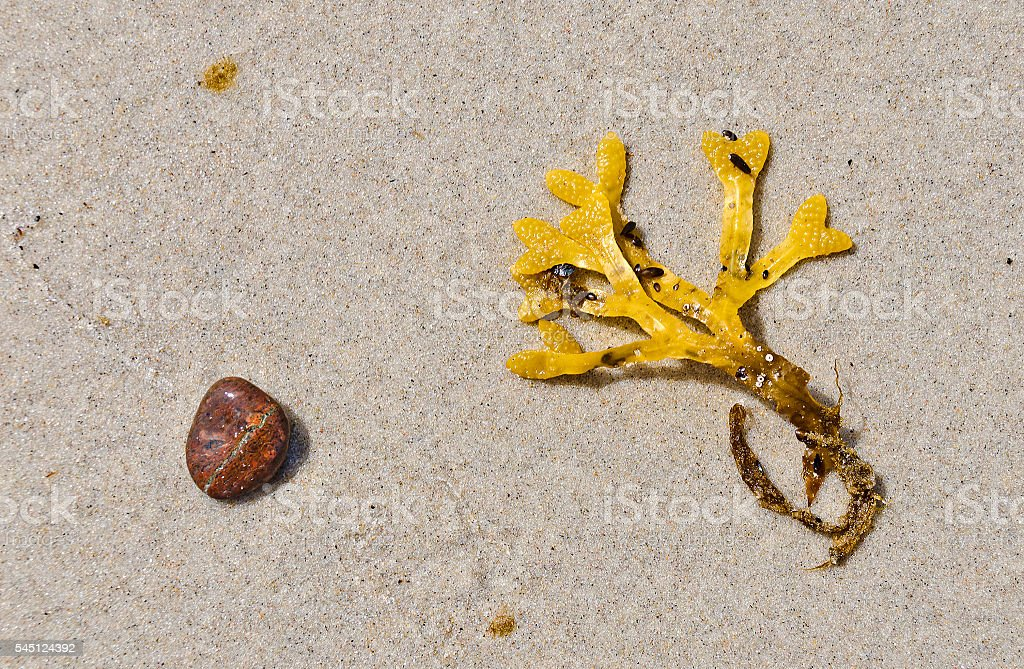 yellow seaweed and a rounded stone stock photo