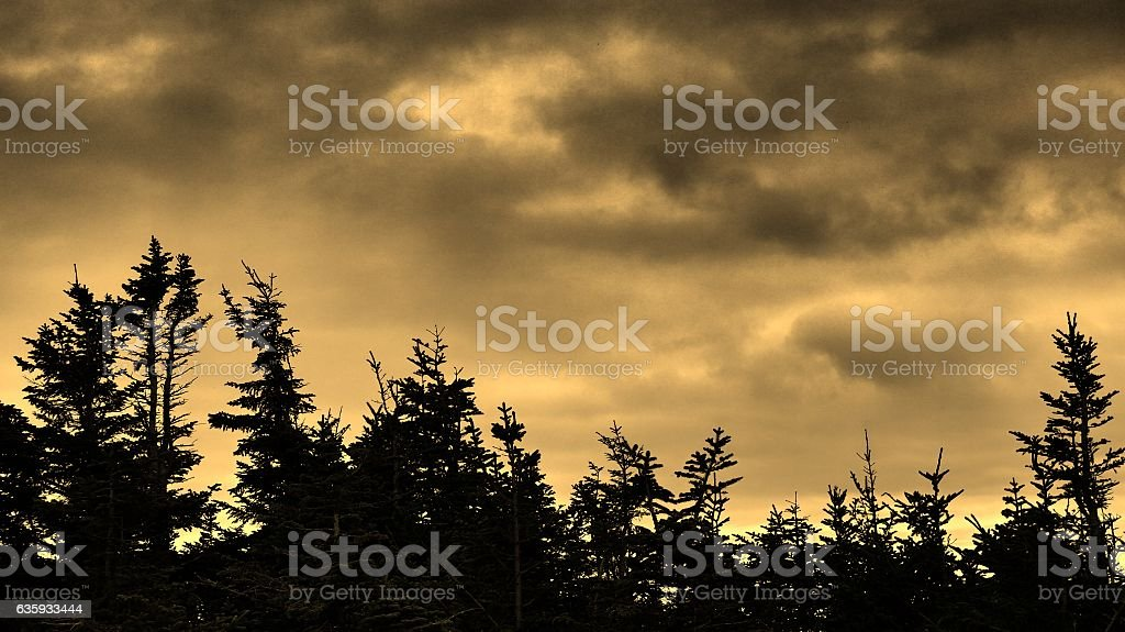 Yellow Sepia Photographic Filter Sky and Pine Tree Line Background stock photo