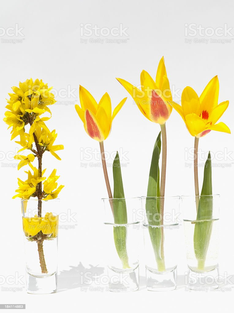 Yellow Series royalty-free stock photo