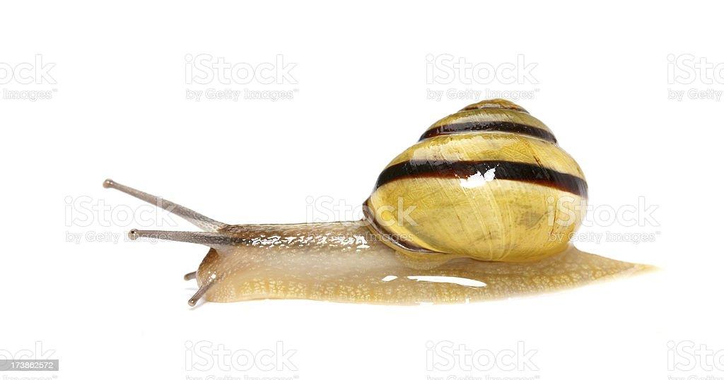 yellow snail stock photo
