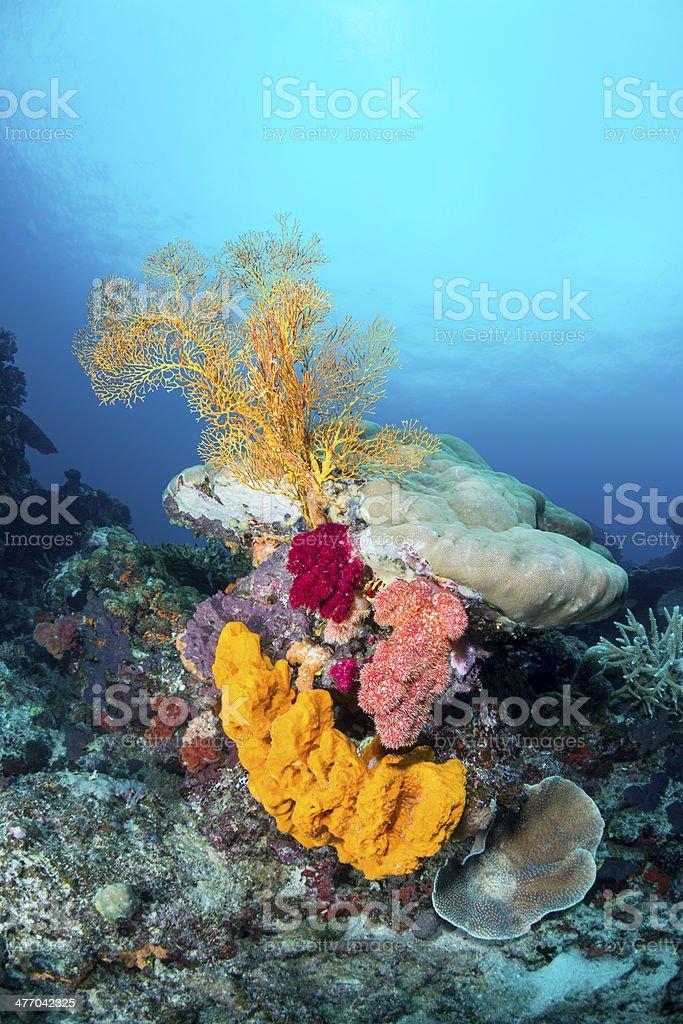 Yellow sponge and sea fan stock photo