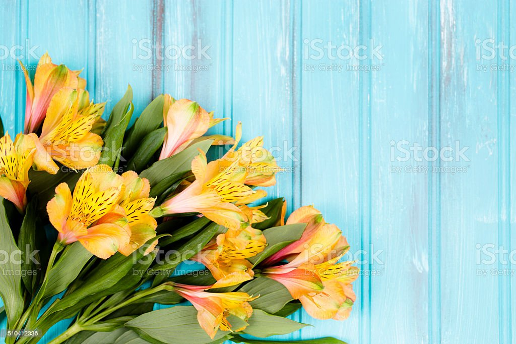 Yellow, spring alstroemeria flowers on vintage blue wood background. stock photo