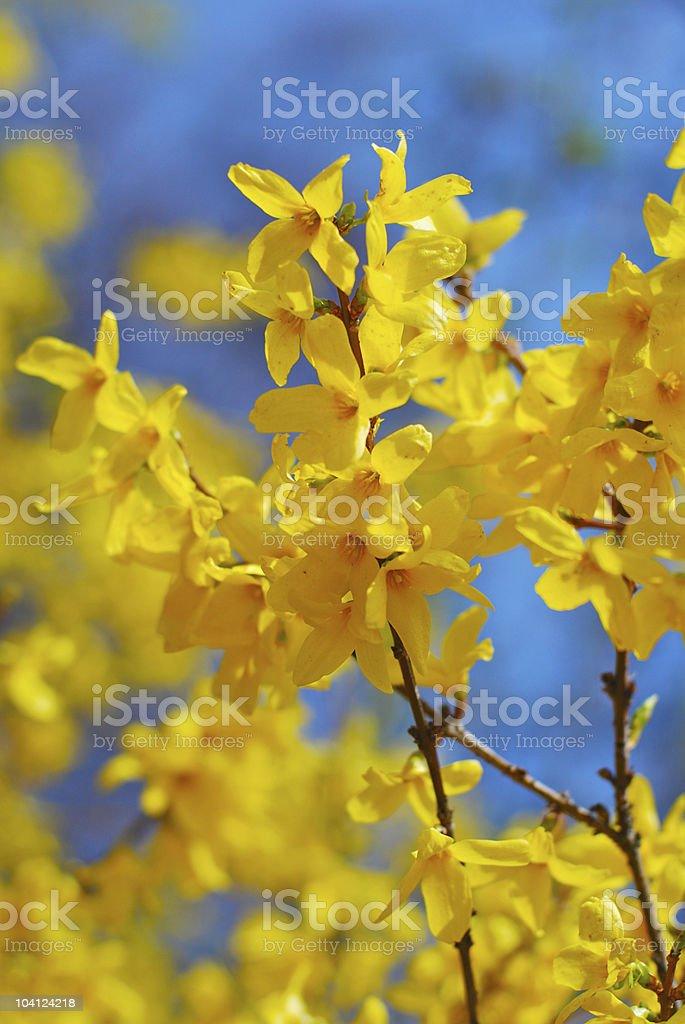 Yellow spring branch stock photo