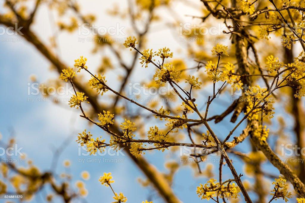 Yellow Spring flower stock photo