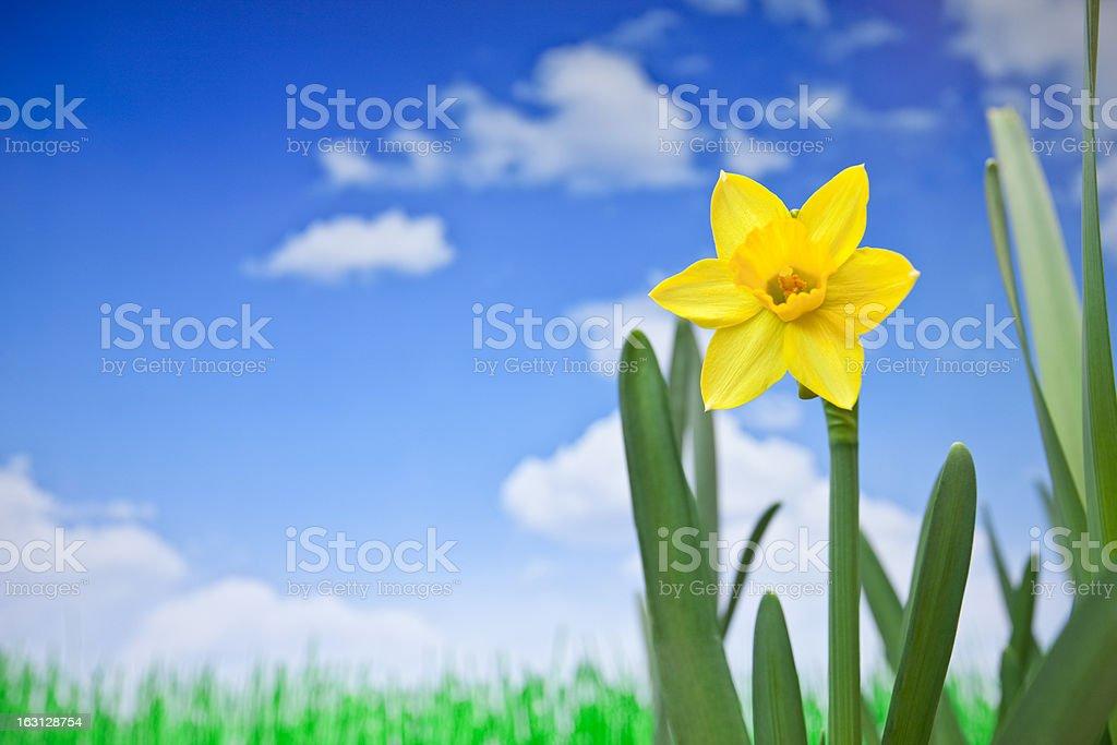 Yellow spring royalty-free stock photo