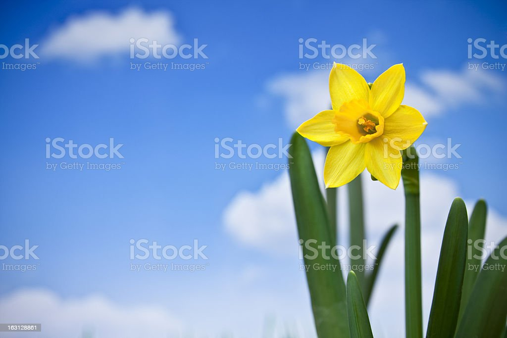 Yellow spring royalty-free stock photo