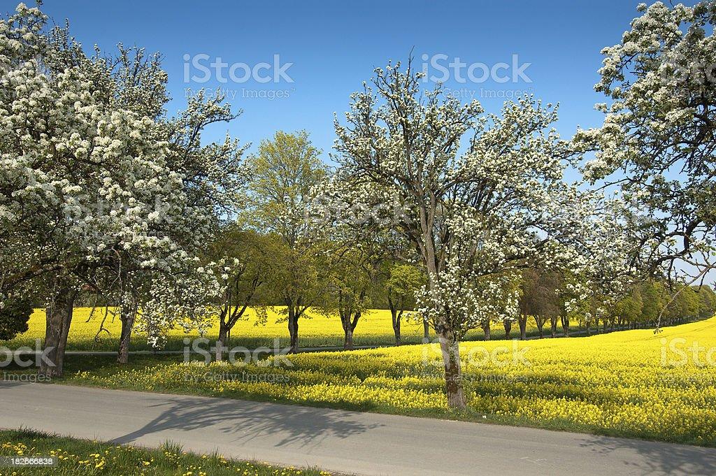 Yellow Spring stock photo