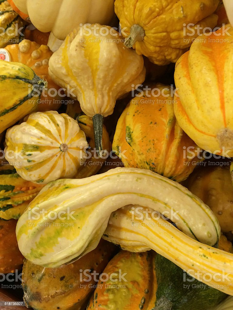 Yellow Squash stock photo