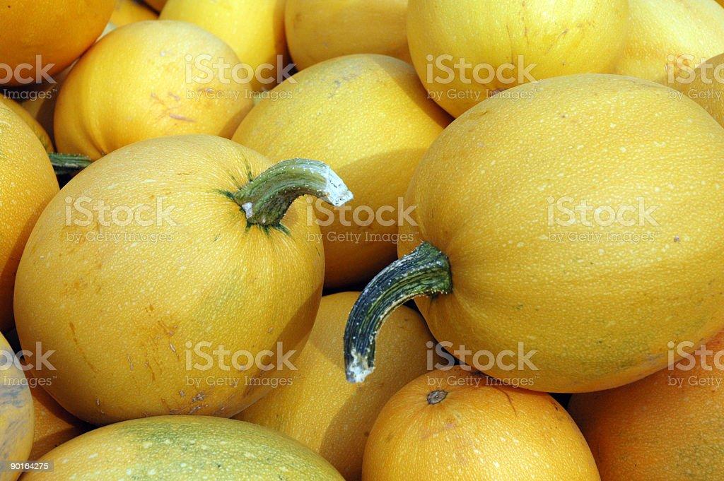 Yellow Squash royalty-free stock photo