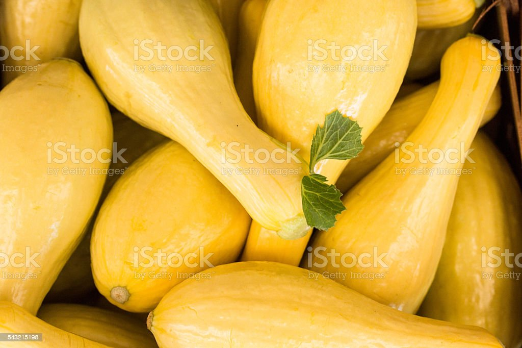Yellow Squash Vegetables For Sale At Farmers Market stock photo