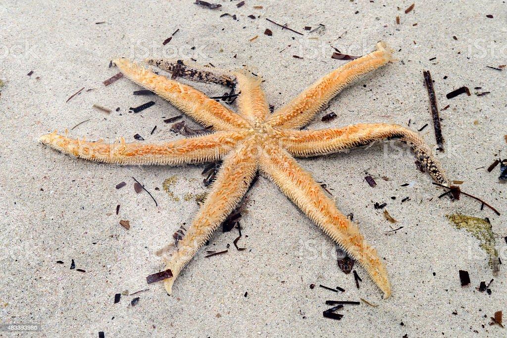 Yellow starfish, Dunsborough, Western Australia stock photo