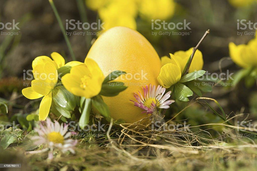 yellow to yellow stock photo