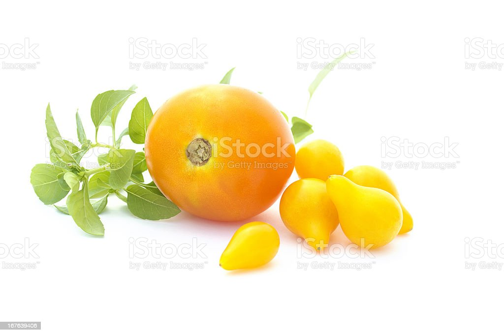 Yellow tomatoes and basil isolated on white stock photo