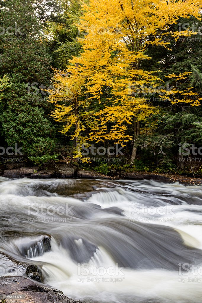 Yellow Tree 5131 stock photo