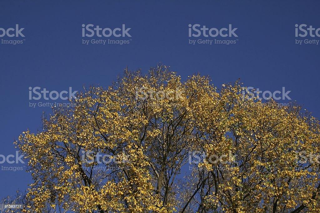 Yellow tree into the blue sky royalty-free stock photo