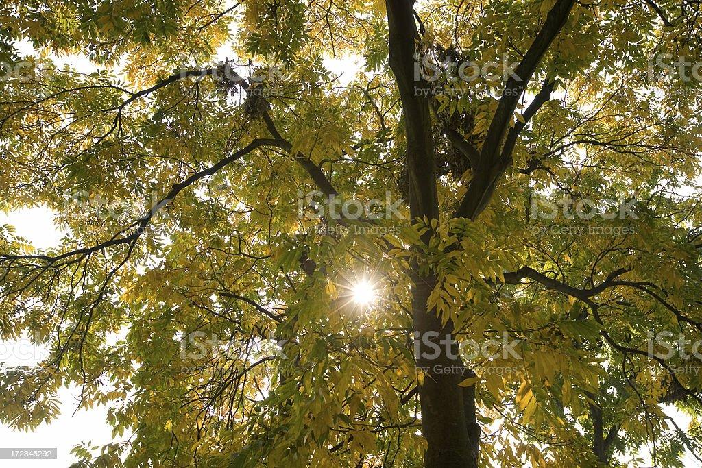 yellow tree stock photo