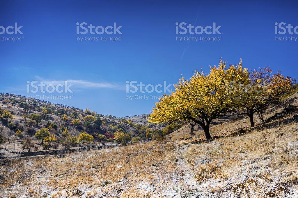 Yellow Trees on Rural Area stock photo