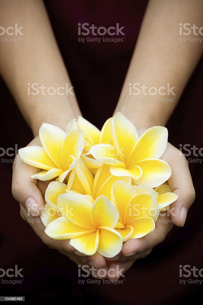 yellow tropical flowers on hands stock photo