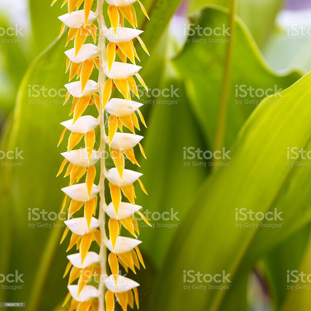 Yellow tropical flowers stock photo