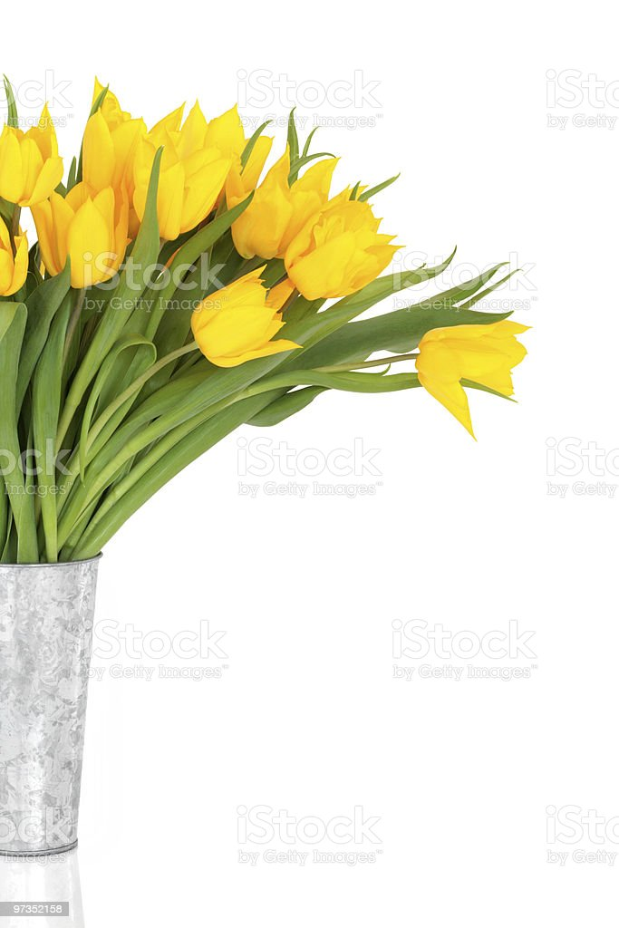 Yellow Tulip Flower Beauty royalty-free stock photo