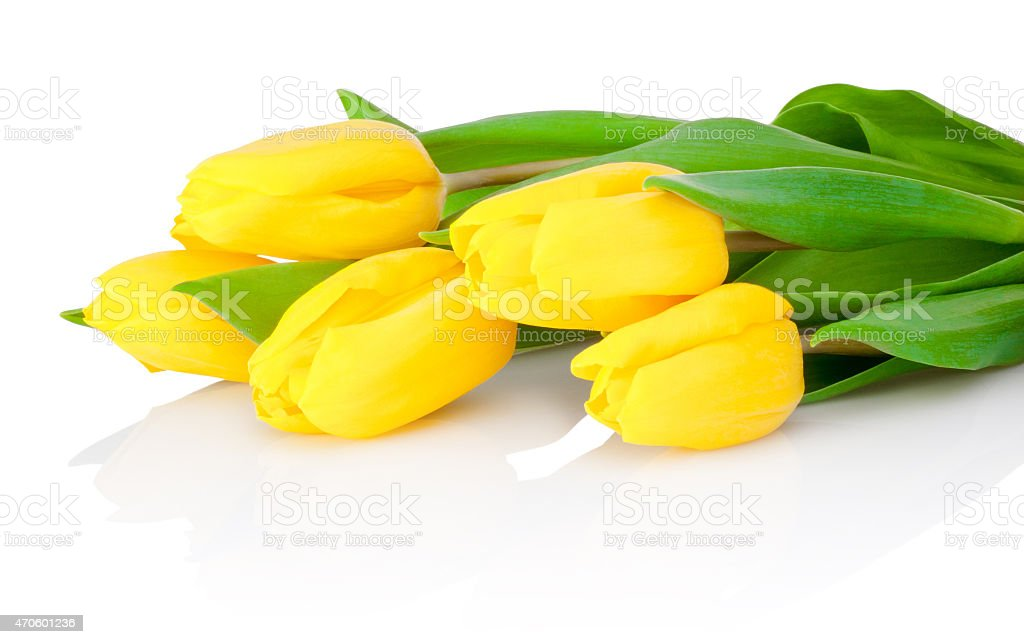 Yellow tulip flowers are isolated on a white background stock photo