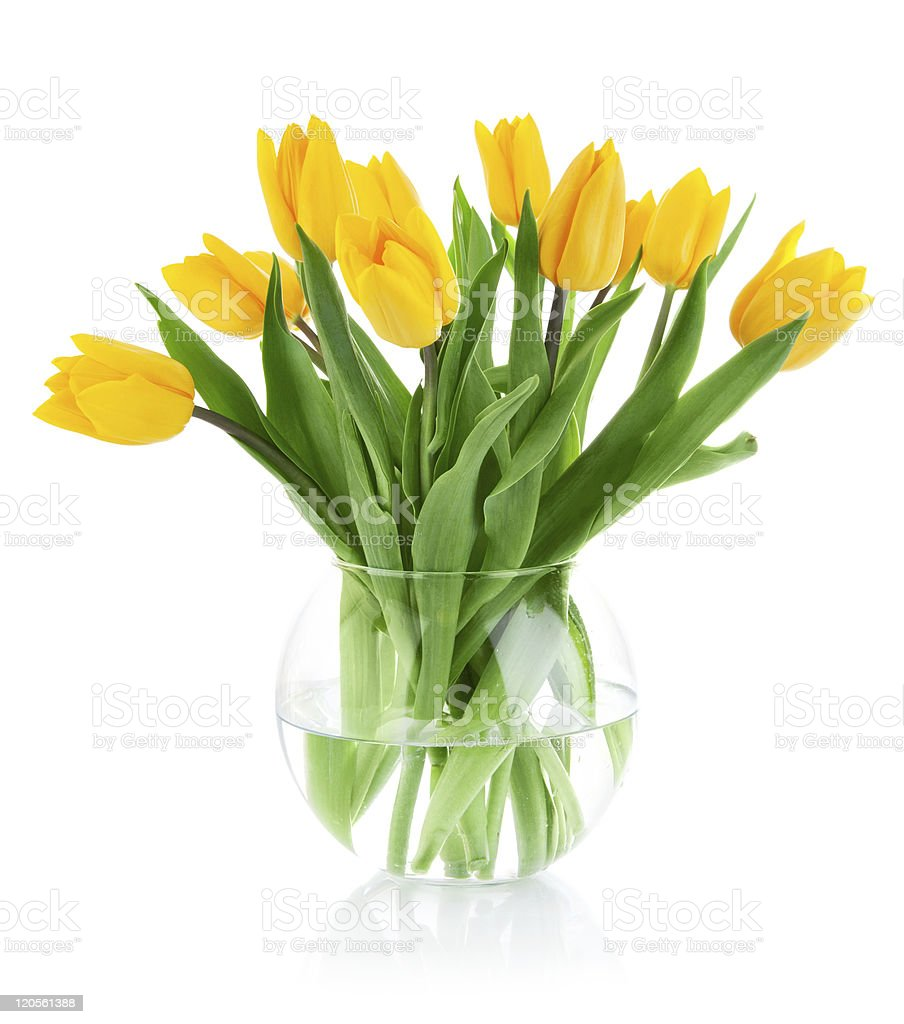 yellow tulip flowers in glass vase stock photo