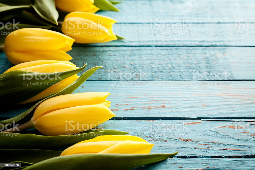 Yellow Tulip Flowers on Old Blue Wood - Season Background stock photo