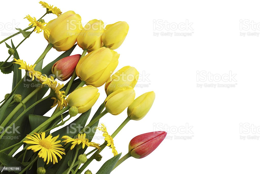 yellow tulips and daisies royalty-free stock photo