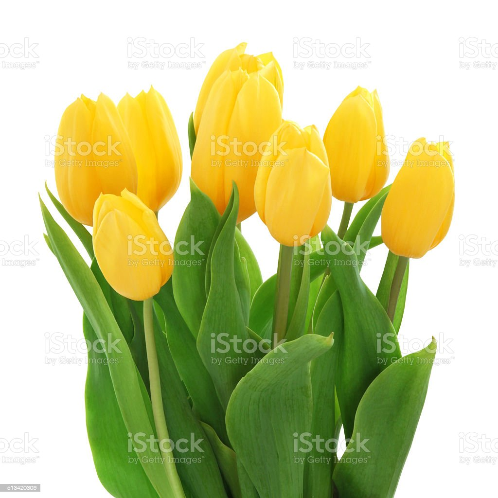 Yellow Tulips Bouquet (with path) stock photo