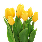 Yellow Tulips Bouquet (with path)