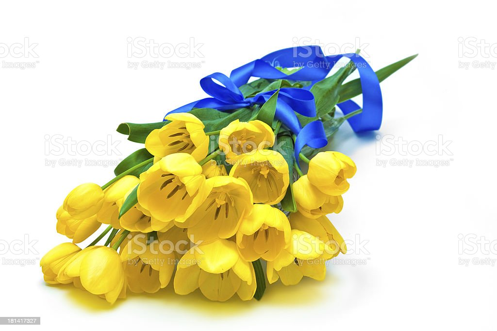 yellow tulips with blue ribbon royalty-free stock photo