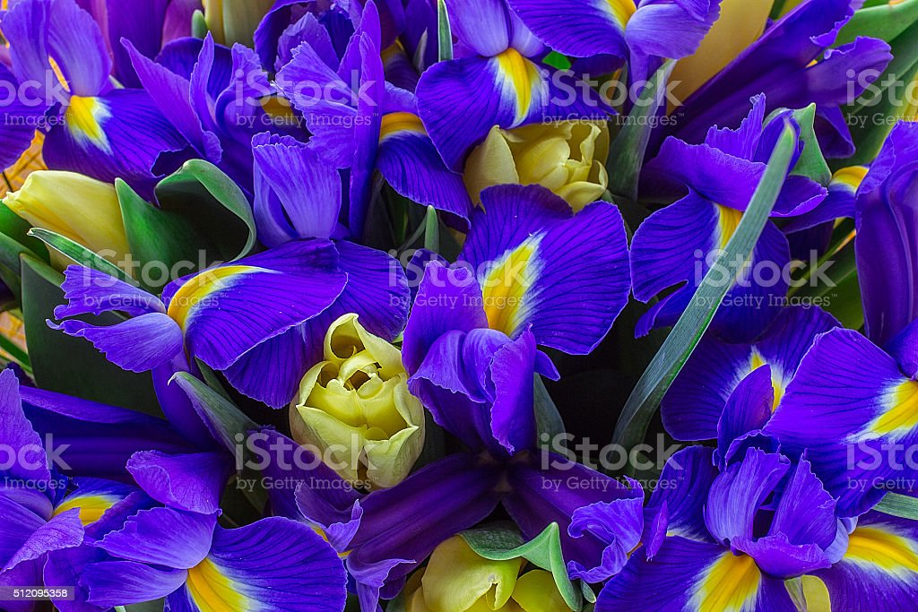 yellow tulips with the irises. top view stock photo