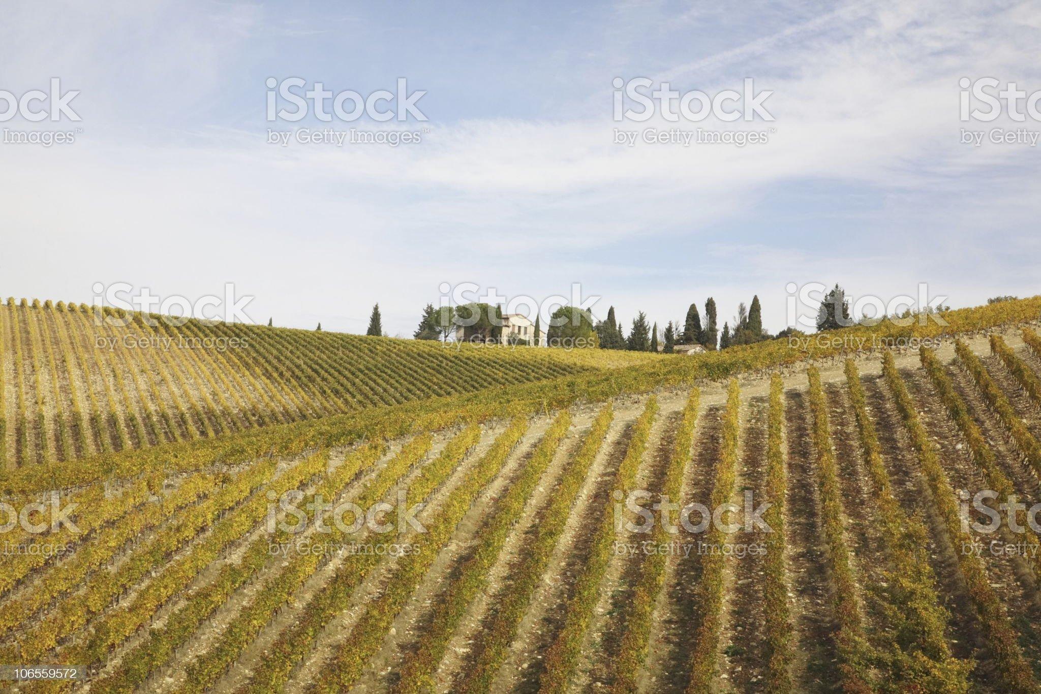 Yellow Vineyards in Tuscany Fall royalty-free stock photo