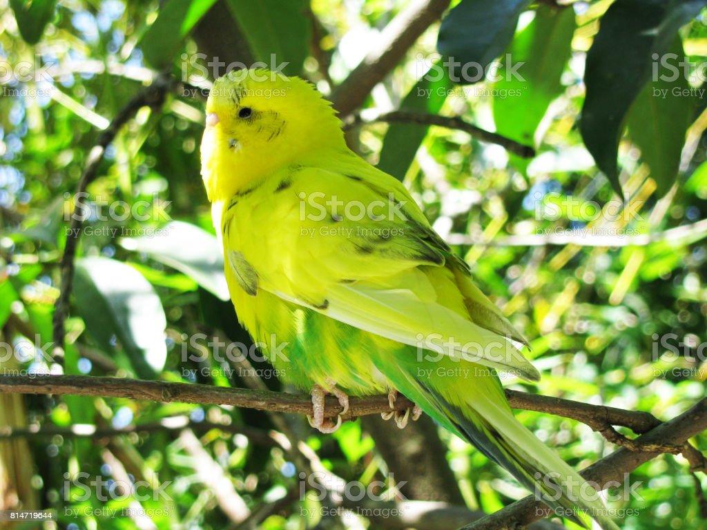 Yellow Wild Bird stock photo